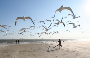 Ed Schipul from Houston, TX, US - running with the seagulls. CC BY-SA 2.0.