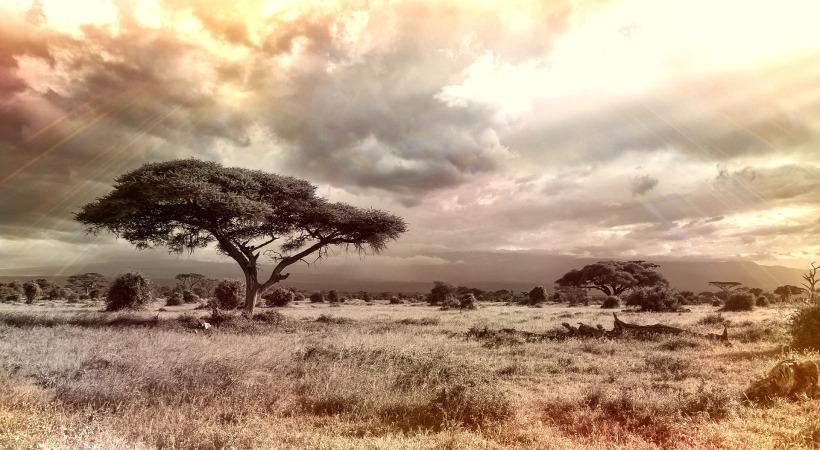 africa-944465_1920