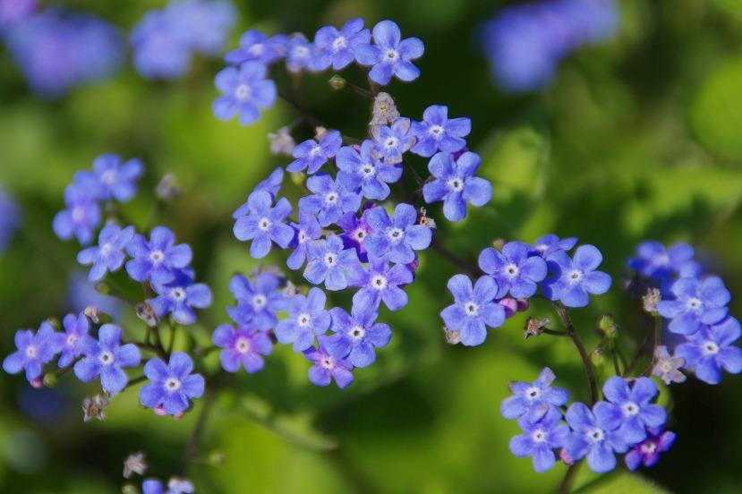 flower-64118_1920