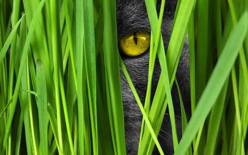 cat-1367000_1920