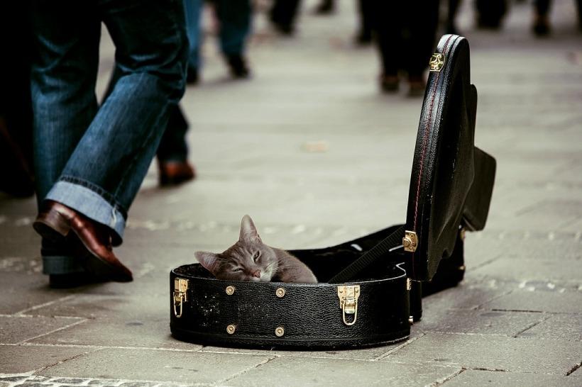 kitty-491013_1280