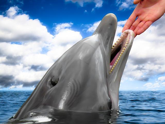 dolphin-1547320_640
