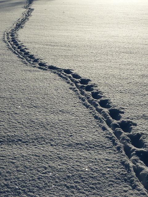 snow-69830_640