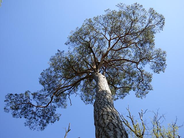 tree-1367869_640