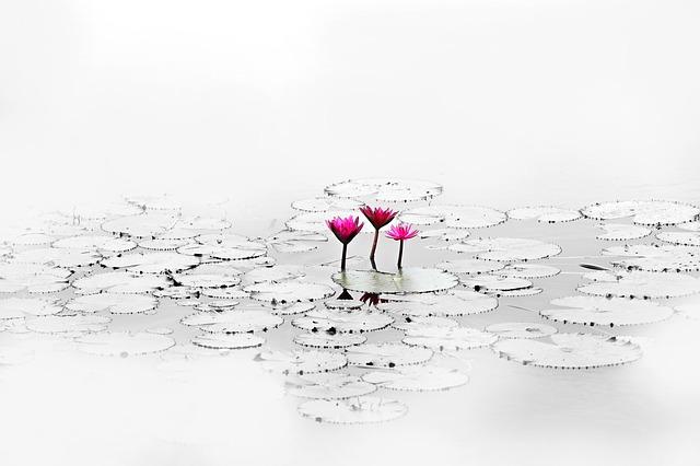 lotus-1700557_640.jpg