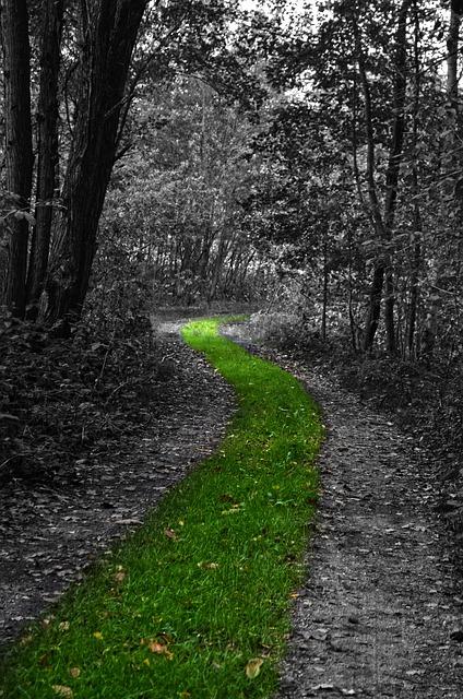 nature-984820_640.jpg