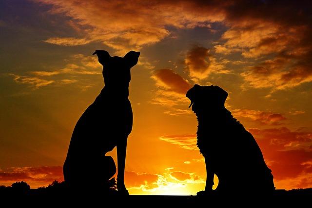 dogs-2222801_640.jpg