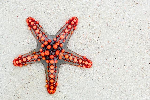 starfish-74535_640.jpg