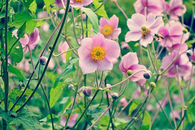 flower-1613469_640.jpg