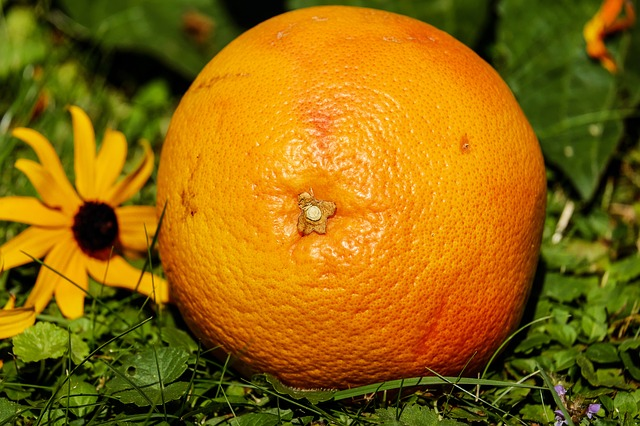 grapefruit-1647507_640.jpg
