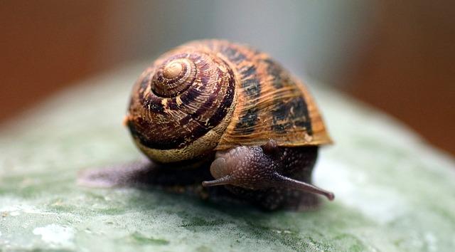 snail-2245529_640.jpg