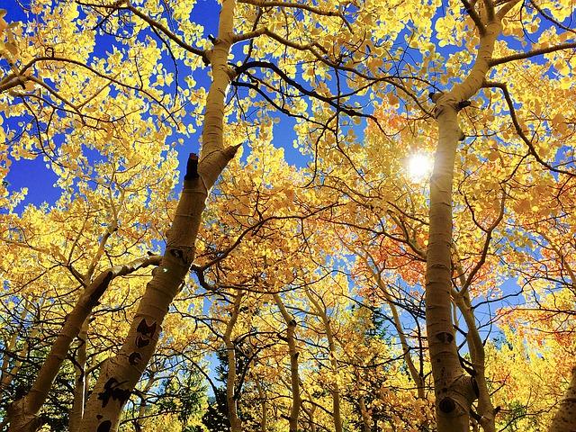 leaves-1363766_640.jpg