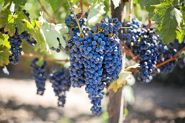 purple-grapes-553464_640.jpg