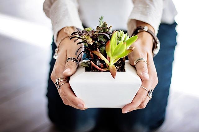 succulents-2347550_640.jpg
