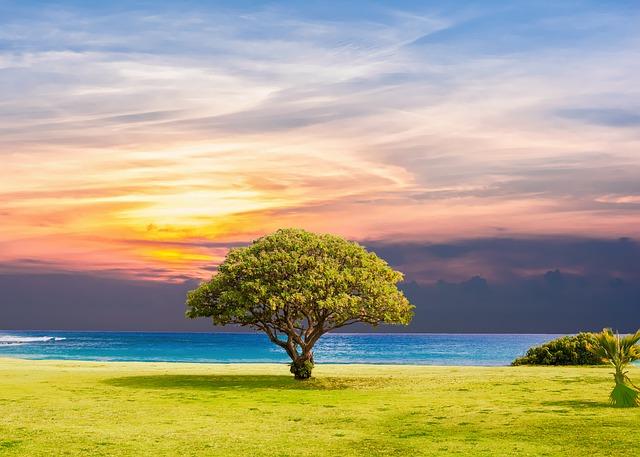 tree-2435269_640.jpg