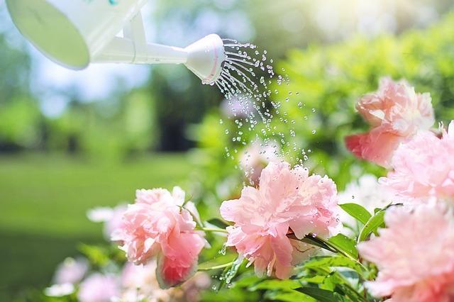 watering-2389940_640.jpg