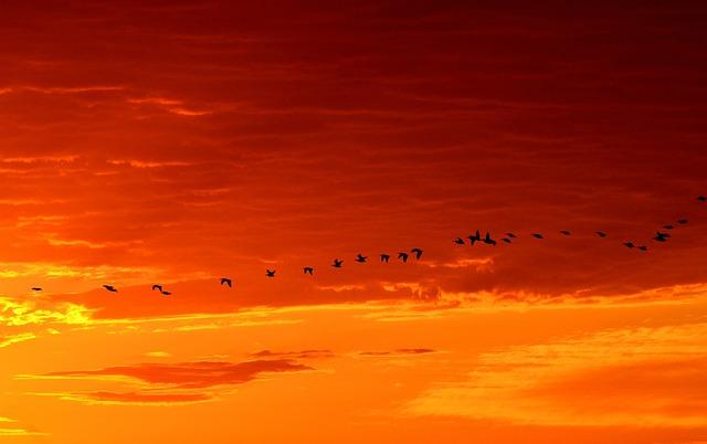 geese-1622692_640.jpg
