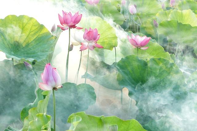lotus-2528456_640.jpg