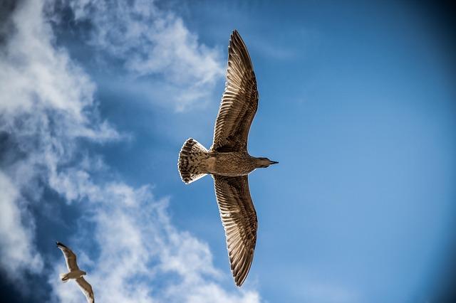 sea-gull-765490_640.jpg