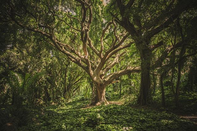 tree-1209774_640.jpg