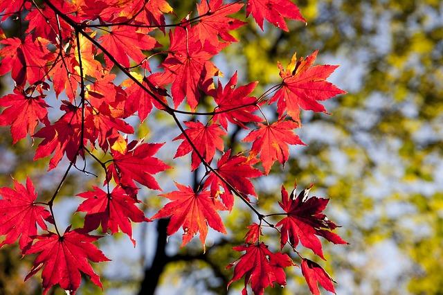 autumn-2789234_640.jpg