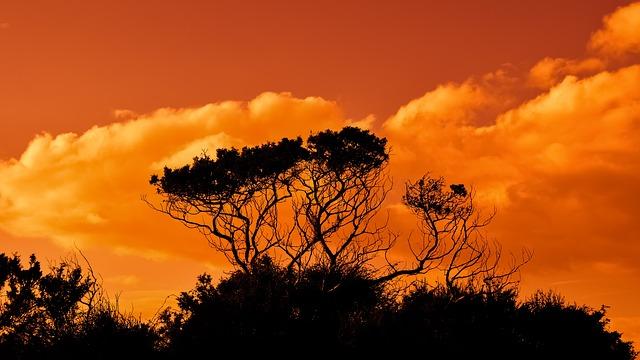 trees-2920264_640.jpg