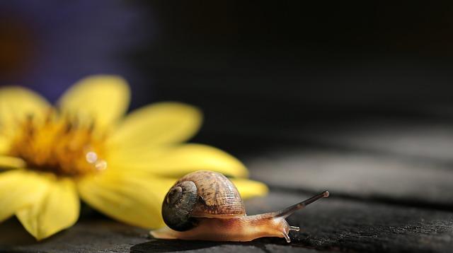 snail-2760137_640.jpg