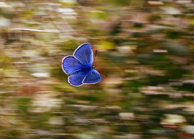 butterfly-2837589_640.jpg