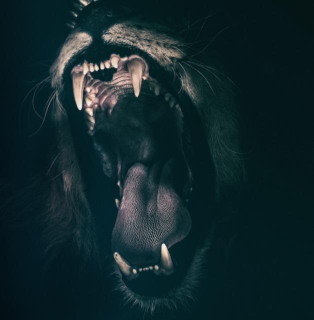 lion-2885618_640.jpg