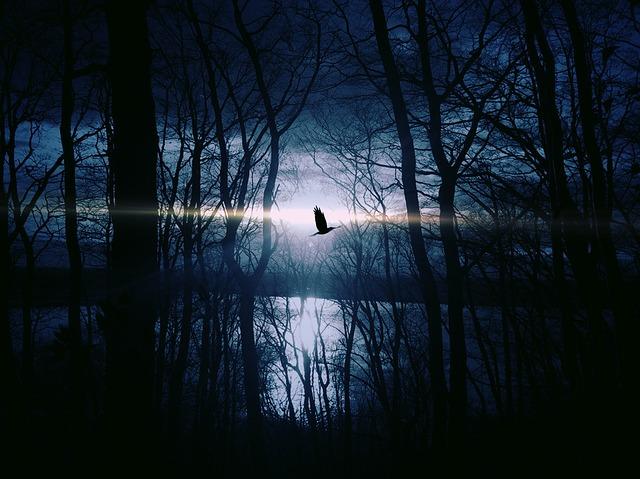 bird-383245_640 (1)