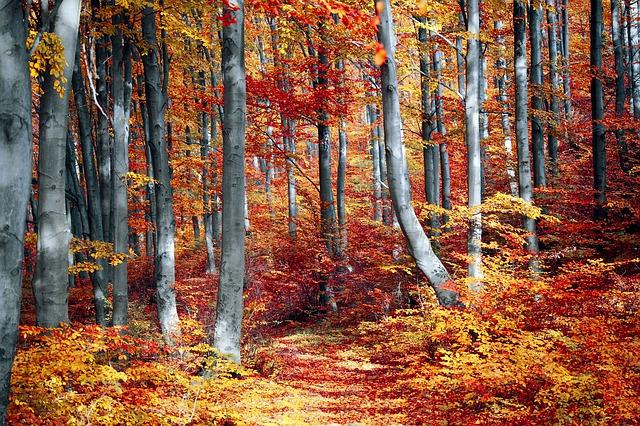 fall-3089995_640.jpg