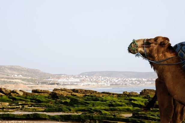 camel-2290901_640.jpg