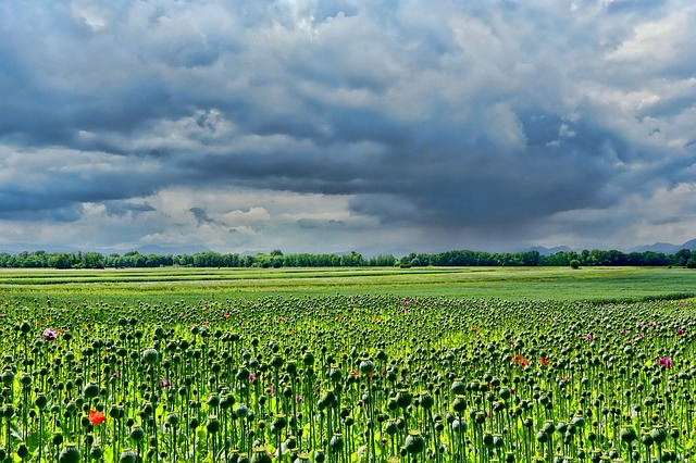field-of-poppies-3432640_640.jpg