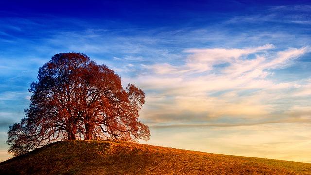 landscape-3155182_640.jpg