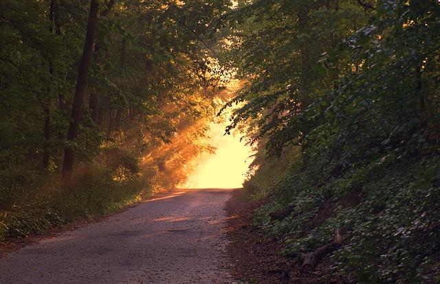 sunlight-166733_640.jpg