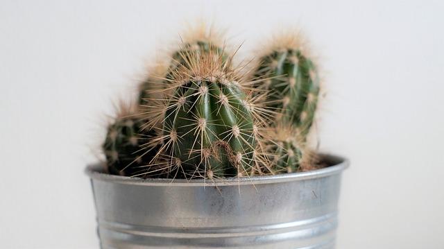 cactus-2643512_640.jpg