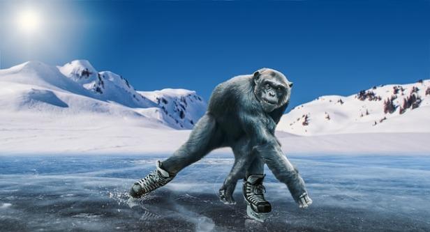 chimpanzee-3540046_640.jpg