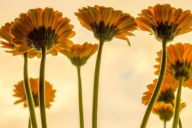 flowers-3705716_640.jpg